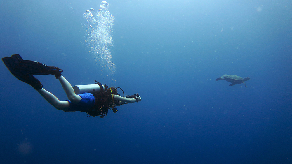 Underwater Videography Course Underwater Photography Underwater Videography Underwater Photographer Underwater Videographer Underwater Photo Underwater Production Passion Sea Ocean Water El Nido Palawan Philippines Marine Life Corals Reefs Scuba Diving Turtle