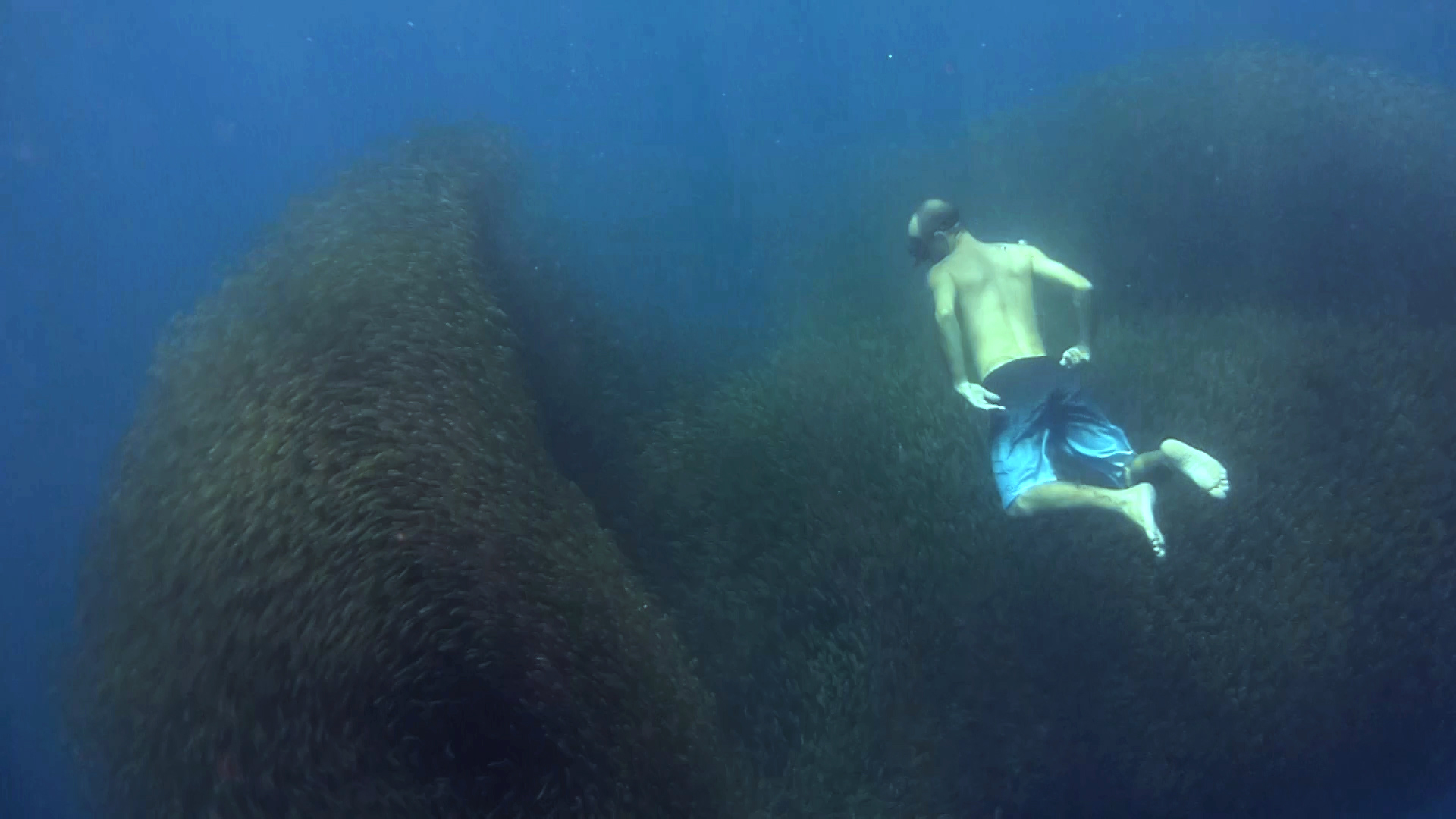 Underwater video : Swimming in a fish bait ball