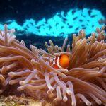 best underwater photos