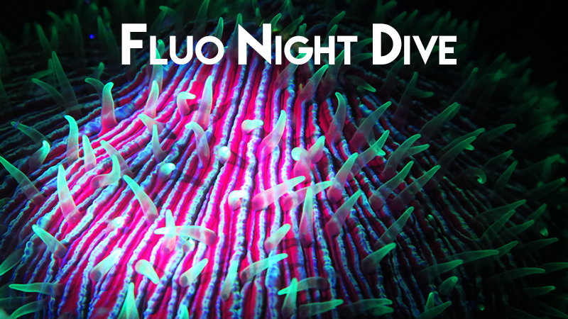 Fluo night dive