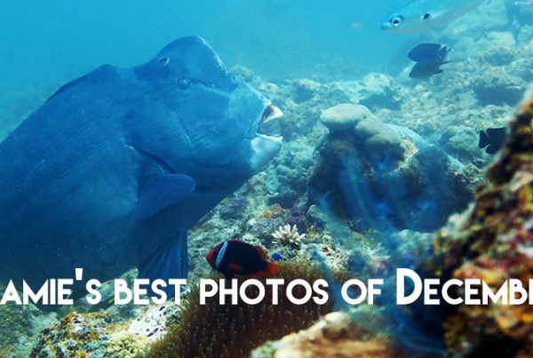 Diving Underwater Water Sea Ocean Underwater Photography Underwater Videography Underwater Photo Marine Life Turtle Fish Corals Reef El Nido Palawan Philippines Adventure Travel Leisure Discover Scuba Diving Underwater Videographer Underwater Photographer Underwater Videography Course Vitaminsea Parrotfish