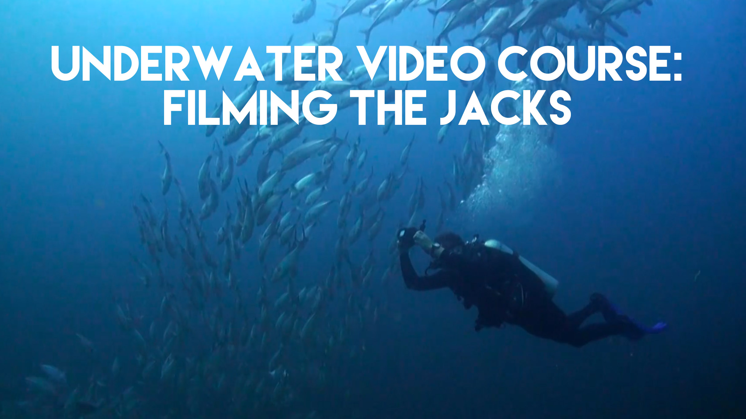 Underwater video course: Filming the Jacks