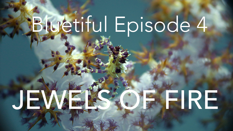 Bluetiful Episode 4: Jewels of Fire