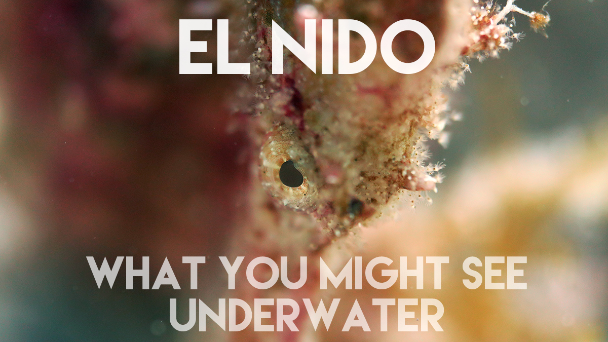 El Nido: What you might see underwater