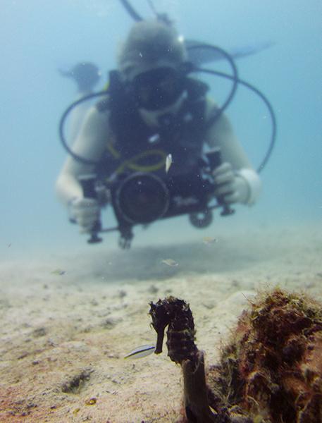 Diving Underwater Water Sea Ocean Underwater Photography Underwater Videography Underwater Photo Marine Life Turtle Fish Corals Reef El Nido Palawan Philippines Adventure Travel Leisure Discover Scuba Diving Seahorse Sands