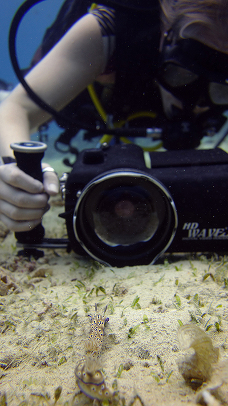 Pro underwater videographer course