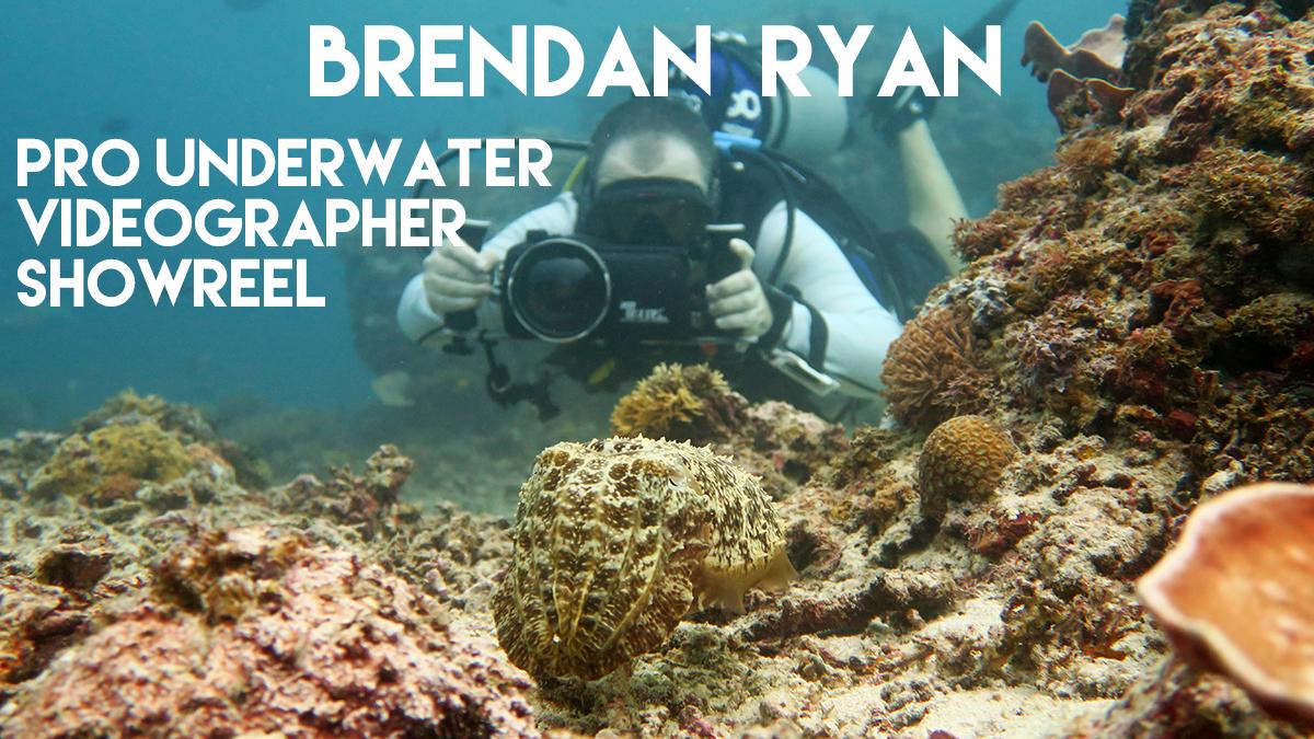 Diving Underwater Water Sea Ocean Underwater Photography Underwater Videography Underwater Photo Marine Life Turtle Fish Corals Reef El Nido Palawan Philippines Adventure Travel Leisure Discover Scuba Diving Cuttlefish
