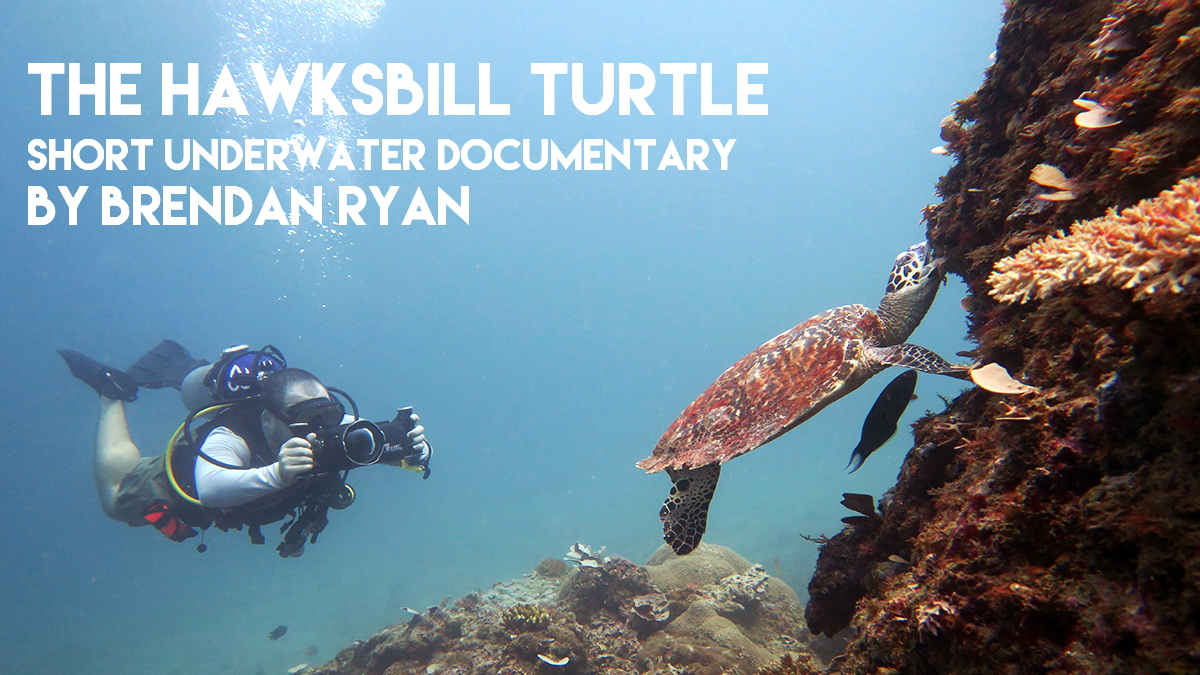 Short Underwater Documentary course: The Hawksbill Turtle