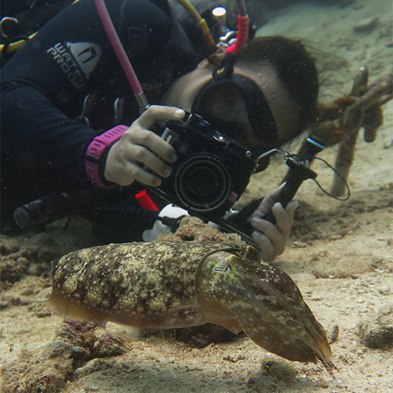 Underwater Videography Underwater Photography Scuba Diving